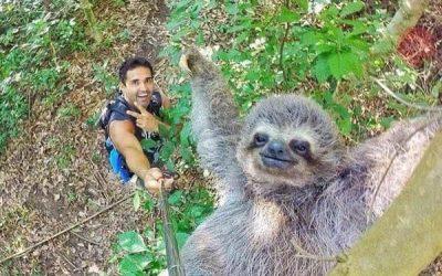 Este selfie con un perezoso hace que el palo de selfie merezca su existencia