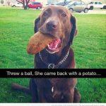 Cuando le tiras una pelota a tu perro y te trae cualquier cosa de vuelta...