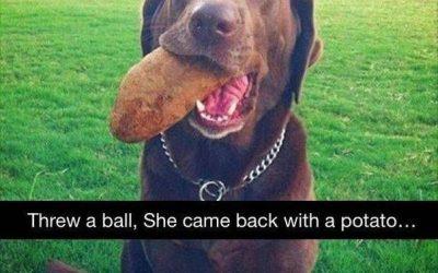 Cuando le tiras una pelota a tu perro y te trae cualquier cosa de vuelta…
