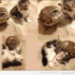 Esta foto de un gatito y un búho te alegrará el día
