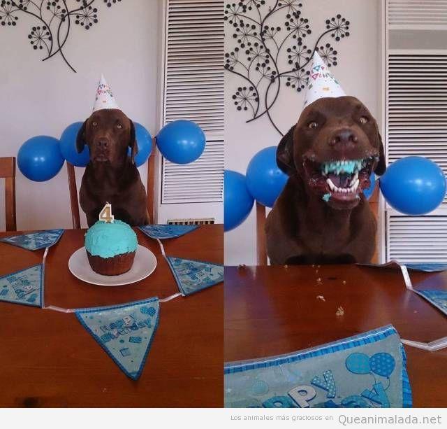 Es el cumple de tu perro y le preparas un pastel azul…