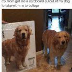 Lo peor de irse a estudiar a otra ciudad es dejar a tu perro atrás... hay una solución!