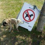 """Como que """"Prohibido perros""""? Te vas a enterar..."""