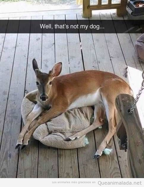 Espera… creo que ese no es mi perro