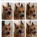 Las caras de un perro comiendo un limón
