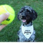 Un pañuelo que resume en un mensaje todo lo que tu perro quiere