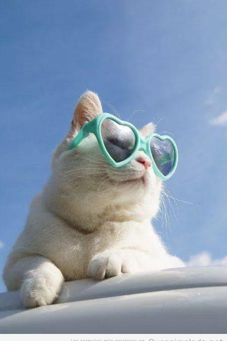 Lo que nos gusta un gato con gafas de corazón…