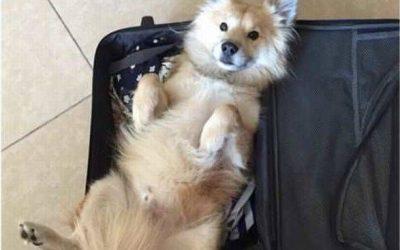Eh, no te olvides de meterme en la maleta!
