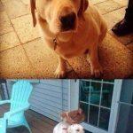 Pollito encima de la cabeza de un perro, unos cuantos años después…