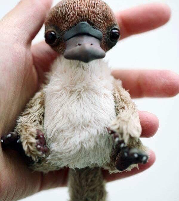 Esta foto de un bebé de ornitorrinco va a alegrarte el día!