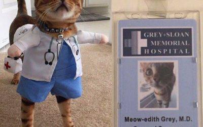 """Una gata disfrazada de Meredith de """"Anatomía de Grey"""", lo ha clavado!"""