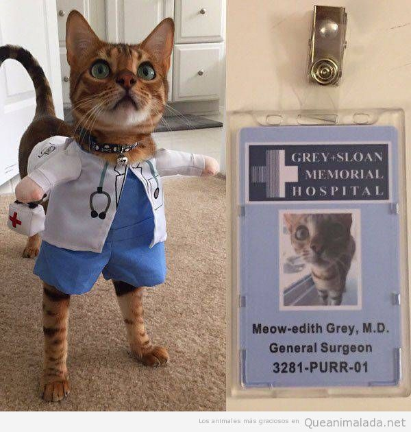 Una gata disfrazada de Meredith de «Anatomía de Grey», lo ha clavado!