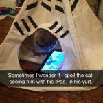 Estaré malcriando a mi gato?