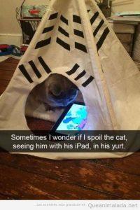 Foto graciosa gato en un tipi jugando con iPad