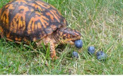 Sabéis qué comen las tortugas?