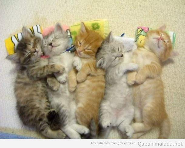 Foto bonita gatos bebé durmiendo juntos 2