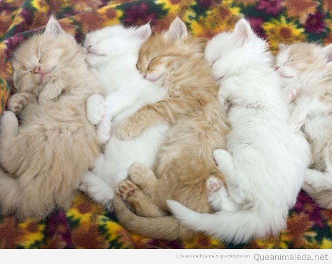Foto bonita gatos bebé durmiendo juntos