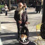 Qué mola más: pasear al gato en el hombro o en un carrito?
