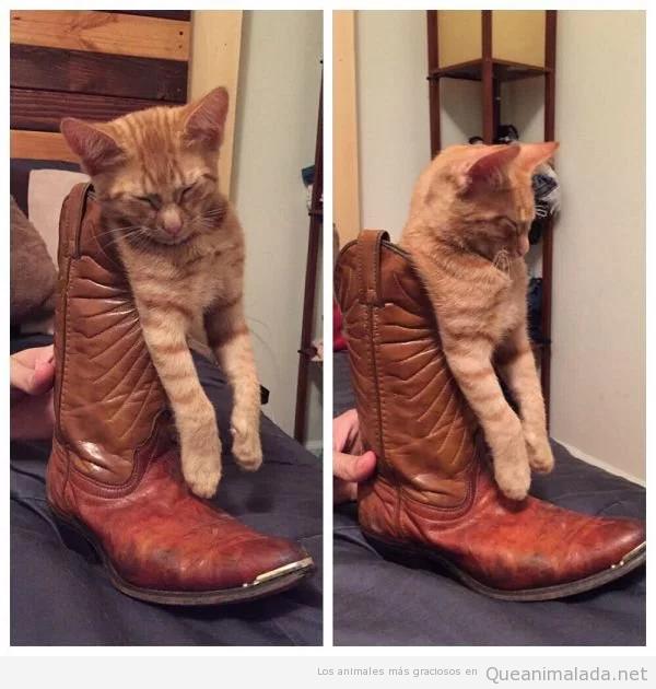 Fotos divertidas de gatos durmiendo en posturas extrañas 7