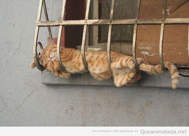 Fotos divertidas de gatos durmiendo en posturas extrañas 2