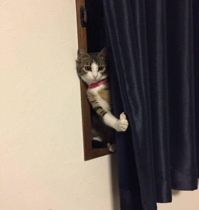 La reacción de un gato cuando un amigo aparece en casa con su perro
