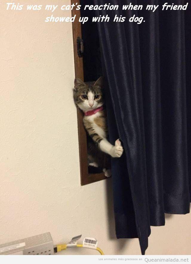 Foto graciosa gato escondido de un perro