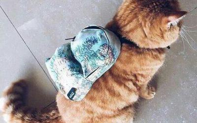 Gatete con mochila de estampado de mapamundi