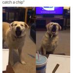 Las caras de este perro intentando atrapar una patata en el aire no tienen precio...