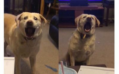 Las caras de este perro intentando atrapar una patata en el aire no tienen precio…