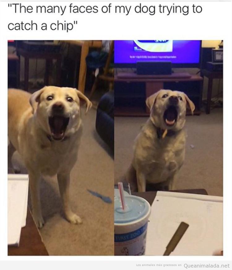 Foto graciosa cara perro atrapando patatas