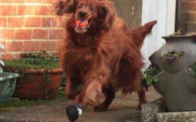 Coge la pelota y corre!