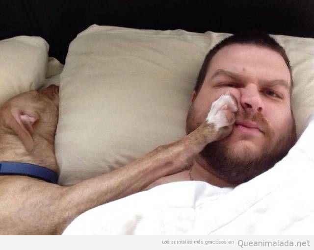 Durmiendo con tu perro… al que le molestas