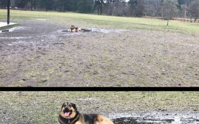 Qué fácil es que un perro sea feliz…