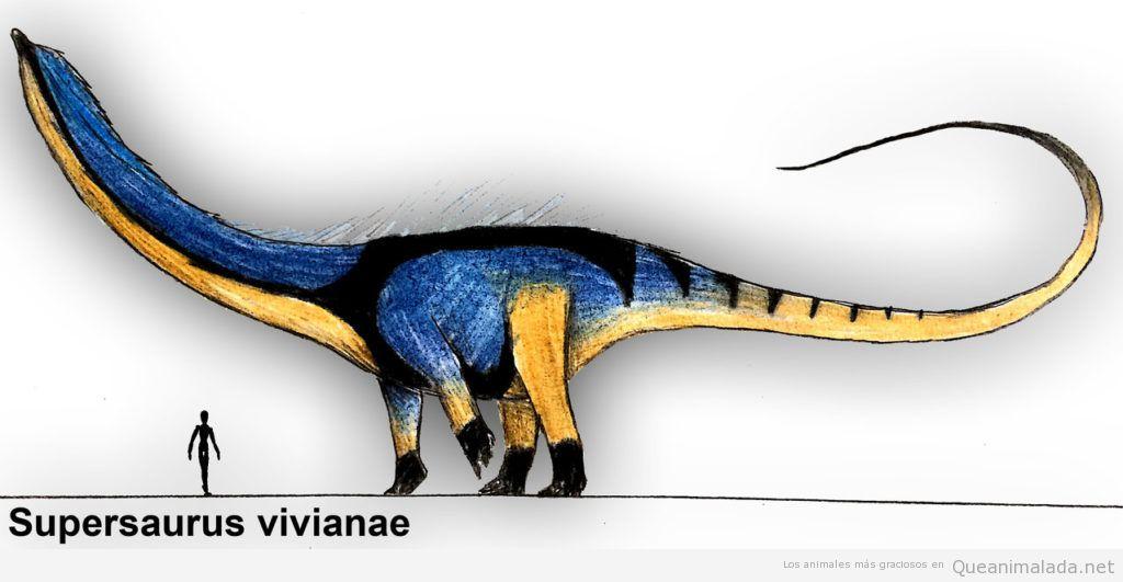 Supersaurus vivianae dinosaurio más grande