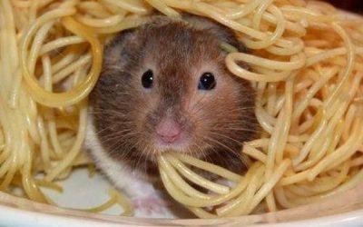Estos hámsters comiendo son de lo más adorable!