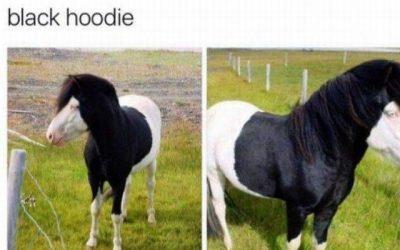 Este caballo de parece a un chico emo…