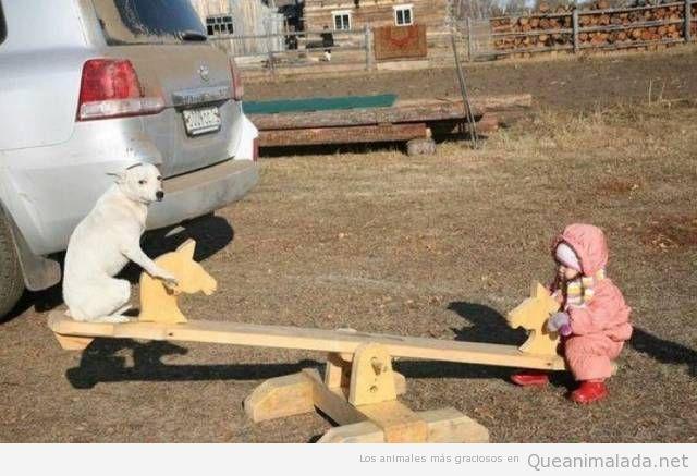 Foto bonita perro y bebé en un balancín