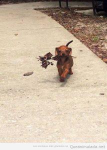 Foto graciosa perro cachorro feliz con una rama