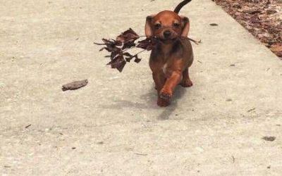 La cara de felicidad cuando tu perro te trae flores…