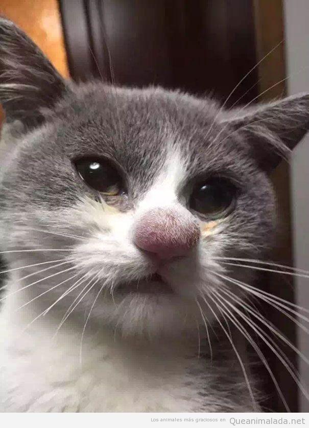 Picadura abeja morro gato