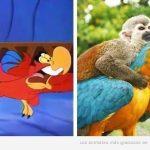 10 animales de dibujos animados que tienen su doble en la vida real