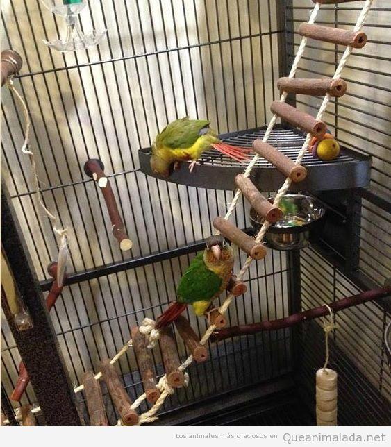 Jaulas impresionantes para pájaros 2