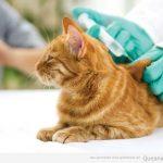 Cuáles son las vacunas que le tienes que poner a tu perro y a tu gato?