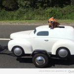 La imagen de la felicidad es este perro en un coche remolcado