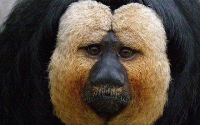 10 animales raros que parecen mágicos pero que existen en nuestro planeta