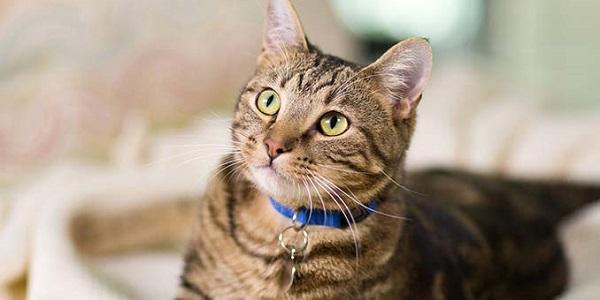 Cuánto vive un gato doméstico