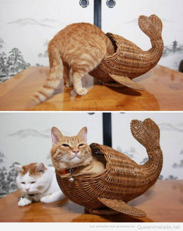 Fotos graciosas gatos metidos en sitios 6