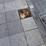 Lugares donde no deberían de estar los gatos y sin embargo...