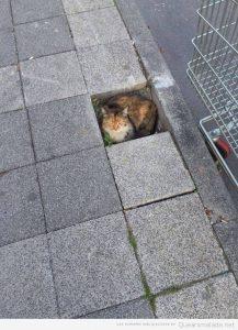 Fotos graciosas gatos metidos en sitios 7