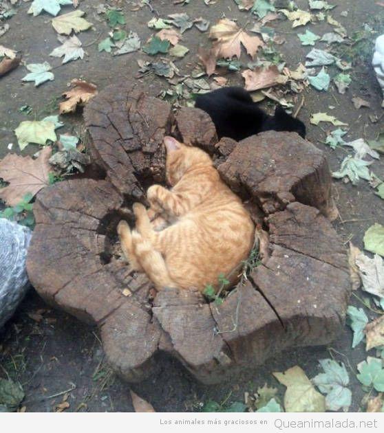 Fotos graciosas gatos metidos en sitios 8